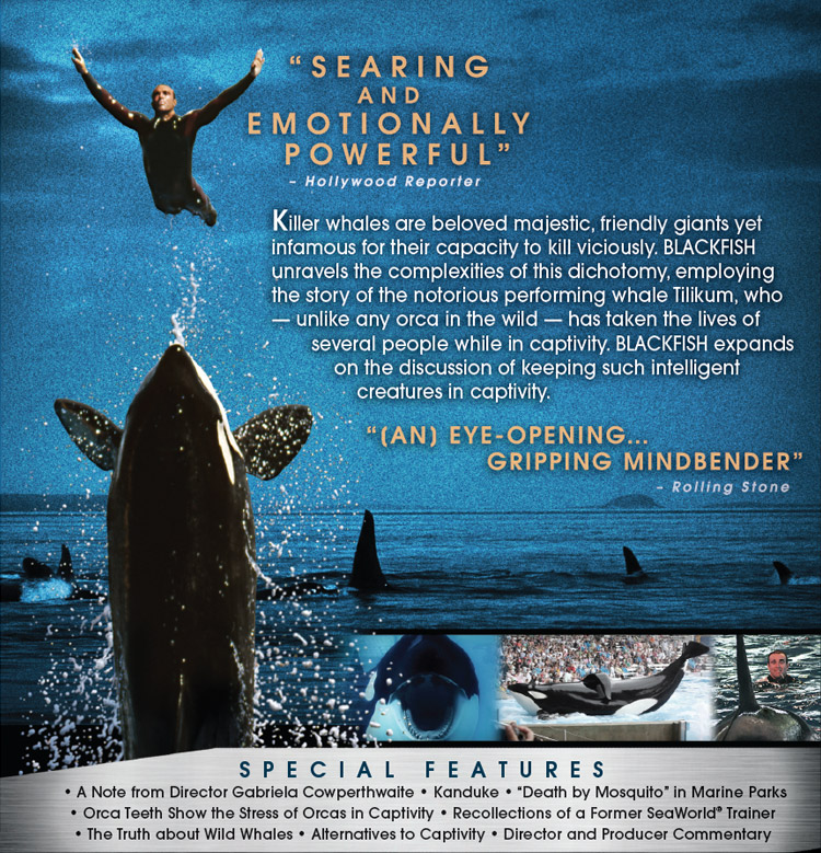 Blackfish (Official Movie Site) - Available on DVD and Blu ... - photo#9